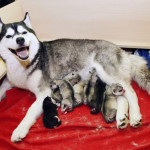 Sweety with puppies